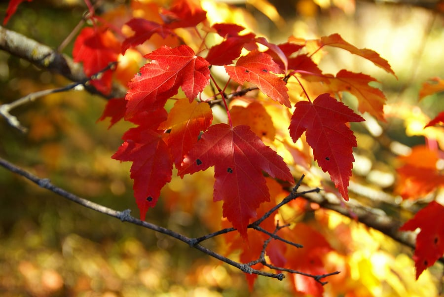 Celebrate the Minnesota Fall Colors at Septoberfest in Wabasha